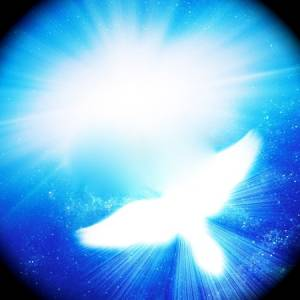 12691382-glowing-dove-against-blue-rays